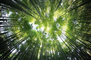 trees-918672_1280
