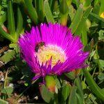 Apprendre à donner pour créer son Univers de Bien-Être : un message métaphorique des abeilles.
