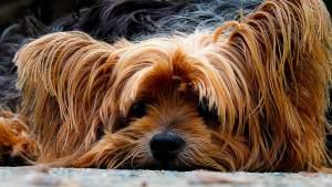 dog-200942_960_720[1]
